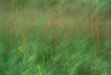 Free Streaked Grass Stock Photo - 98430
