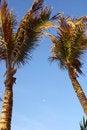 Free Cancun Royalty Free Stock Image - 903636