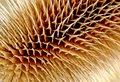 Free The Harmony Of Needles Royalty Free Stock Photos - 904638