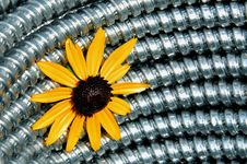 Free Metal And Flower Stock Image - 900091