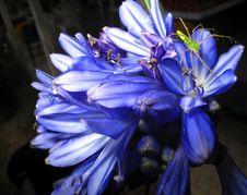 Free Spider On Purple Flower Stock Photo - 900440