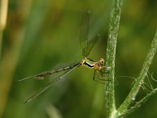 Free Dragonfly Royalty Free Stock Images - 900669