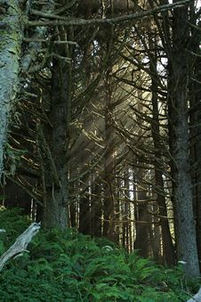 Free Light In The Forest Stock Image - 900951
