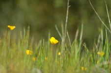 Free Springtime Meadow Royalty Free Stock Photography - 901127
