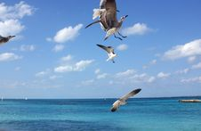 Free Cancun Stock Images - 901624