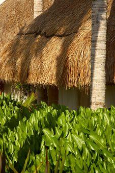 Free Cancun Stock Photo - 901980