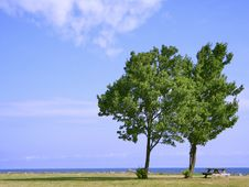 Free Two Trees Picnic Royalty Free Stock Photography - 902187