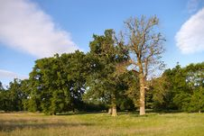 Free A Park View Royalty Free Stock Image - 902306