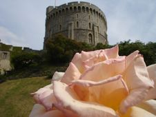 Free Rose Of Windsor Royalty Free Stock Images - 902669