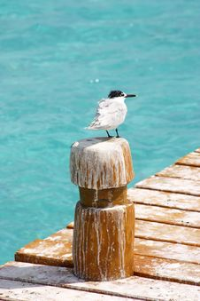 Free Cancun Royalty Free Stock Photography - 903517