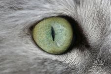Free Eye Of A Cat Stock Images - 904704