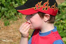 Free Boy Enjoying A Strawberry2 Royalty Free Stock Photos - 905268