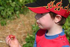 Free Boy Enjoying A Strawberry3 Royalty Free Stock Photos - 905278
