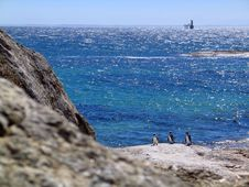 Penguins On Rocks By The Ocean Royalty Free Stock Photo