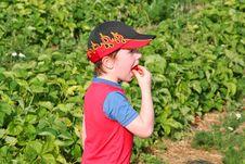 Free Boy Enjoying A Strawberry4 Stock Photos - 905683