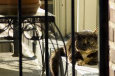 Free Sunday Morning Cat 2 Royalty Free Stock Images - 905689