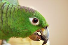 Free Parrot Stock Image - 905961