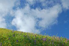 Free Springtime Meadow Royalty Free Stock Image - 906086