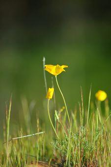 Free Springtime Meadow Stock Photos - 906093