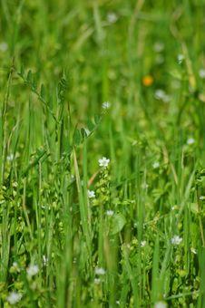 Free Springtime Meadow Stock Photos - 906113
