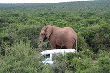 Free Bull Elephant Stock Photography - 906202