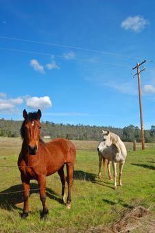 Free Horses In A Field Royalty Free Stock Image - 906266