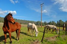 Free Horses In A Field Stock Photo - 906350