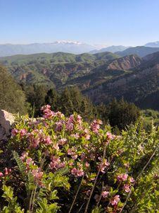 Free Mountain Flowers Stock Photos - 906473