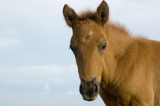 Free Foal Royalty Free Stock Photography - 906647