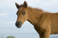 Free Foal Stock Images - 906654