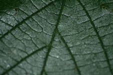 Free Leaf Royalty Free Stock Image - 906976