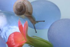 Snail And Kalanchoe