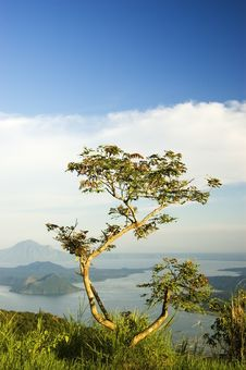 Free Tree Stock Image - 907361