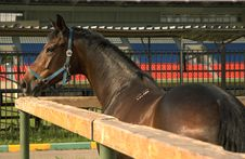 Free Horse In The Corral Royalty Free Stock Photos - 907418