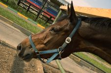Free Brown Horse Stock Photo - 907590
