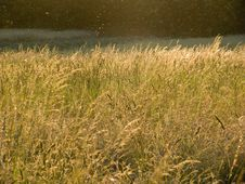 Free Summer Meadow Royalty Free Stock Photography - 907907