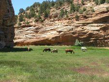 Free Horses In Green Pasture, Utah Stock Images - 908824