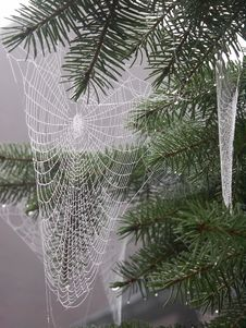 Free Moist Spiderwebs Stock Photography - 909272