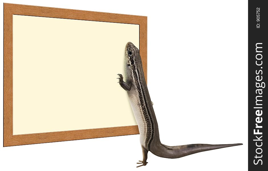 Skink Reading a Sign
