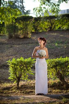 Free Bride In The Evening Stock Images - 9000124