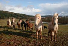 Free Horses Royalty Free Stock Photography - 9000227