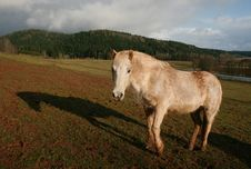Free Horse With Shadow Royalty Free Stock Photography - 9000237