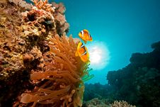 Free Anemonefish, Sun And Ocean Royalty Free Stock Images - 9000329