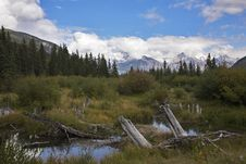 Free Bog In Mountains And Snags Stock Photo - 9000350
