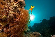Free Anemonefish, Sun And Ocean Stock Photo - 9000370
