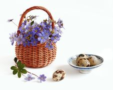 Free Eggs And Violets Stock Image - 9000651