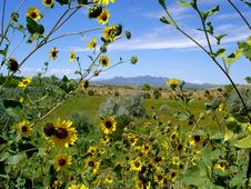 Free View With Sunflowers Royalty Free Stock Photos - 9000858