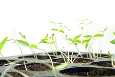 Free Seedling Stock Photos - 9001753