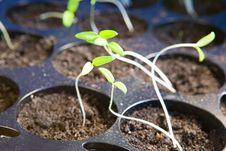 Free Seedling Stock Image - 9001761