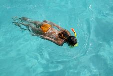 Snorkeling Stock Photography